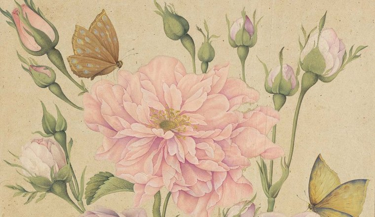 <em>A Spray of Pink Roses with Attendant Butterflies</em>, Attributed to the Zand period artist, Muhammad Baqir Isfahani (fl. 1758-1820), Iran, c. 1764